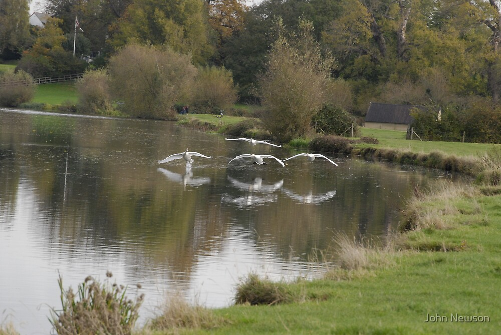 set Flying Swans over River Cam 2 of 9 by John Newson