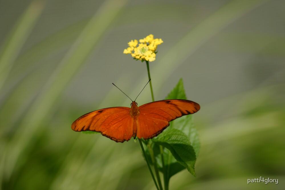 Julia Butterfly in Meadow by patti4glory