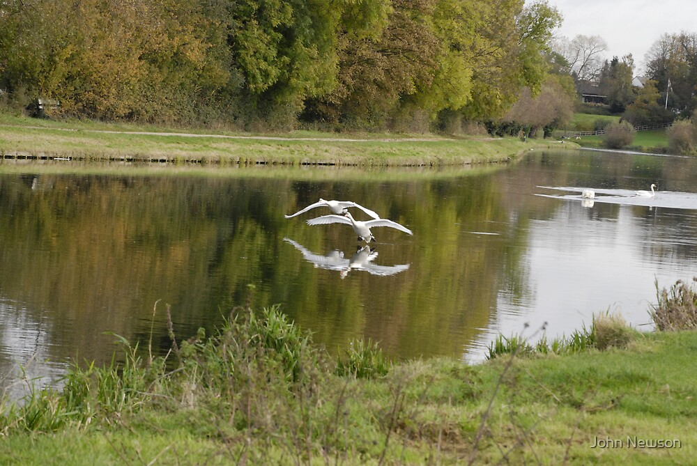 set Flying Swans over River Cam 3 of 9 by John Newson
