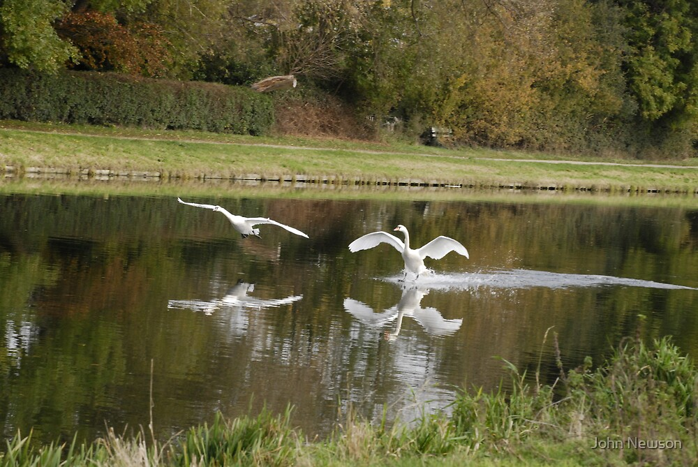 set Flying Swans over River Cam 6 of 9 by John Newson