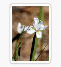 Flower of white iris on a stem with leaves Sticker