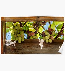 bunches of grapes against the sky in a wooden frame Poster