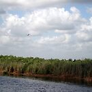 Loxahatchee Nature Reserve by photo4sale