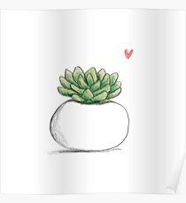 Succulent in Plump White Planter Poster