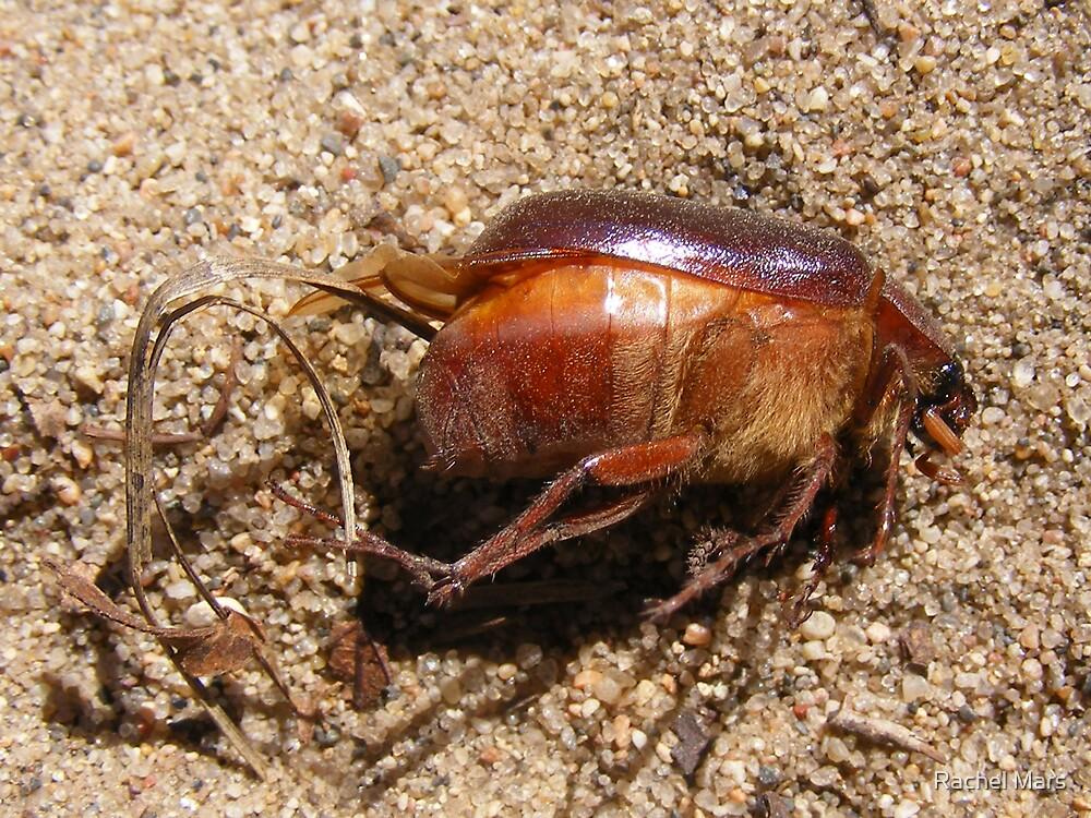 Bug by Rachel Mars