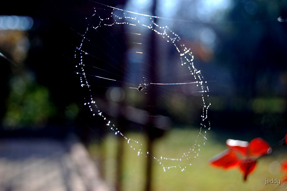 Spider Webs by jeddy