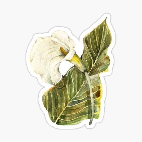 White Calla Lily Botanical Art Sticker