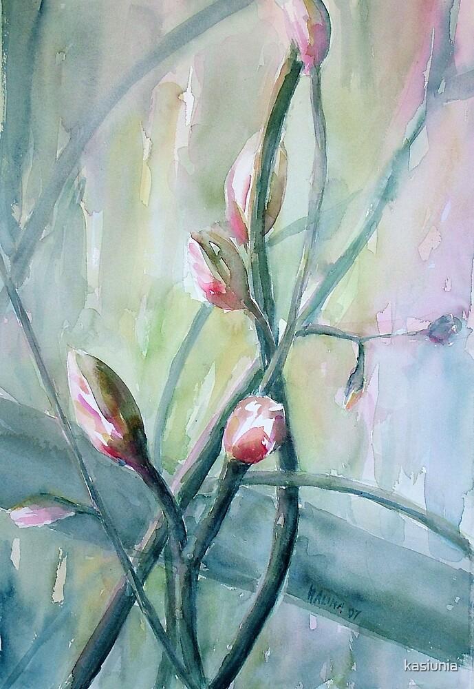 flower buds by kasiunia