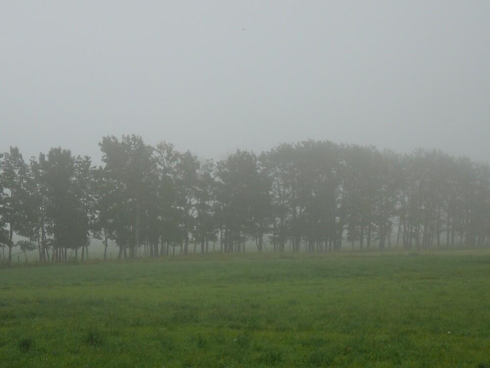 Morning fog by melinahunny