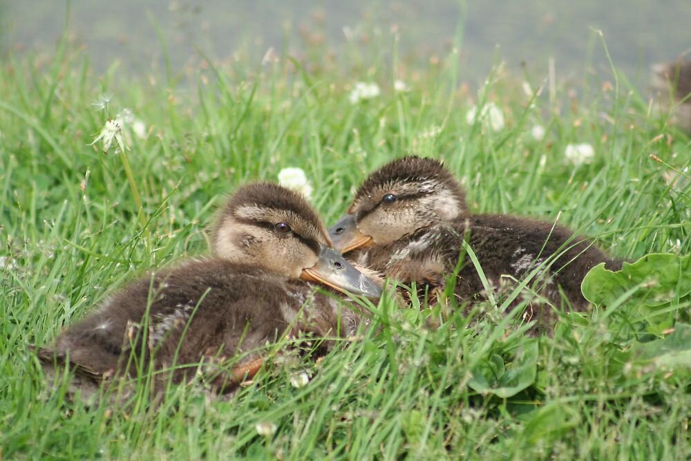 Babies Duckies by declown