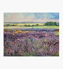 Provence Lavender Photographic Print