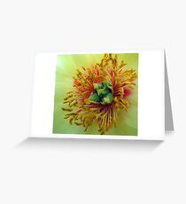 Japanese Tree Peony Greeting Card