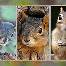 SQUIRRELS: Pine, Red and Ground by Betsy  Seeton