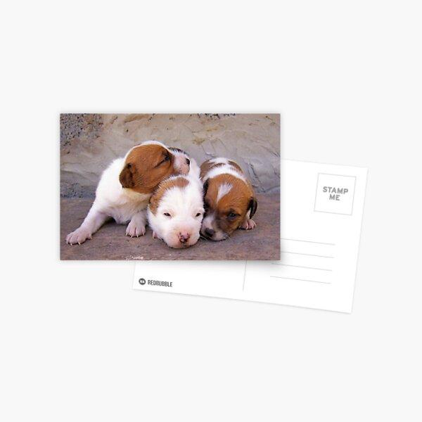 3puppies Postcard