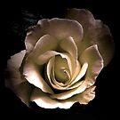 Romance of the Rose by patjila