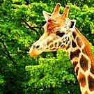 Giraffe & Greenery by Barnbk02