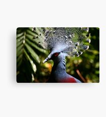Victoria Crowned-Pigeon Canvas Print