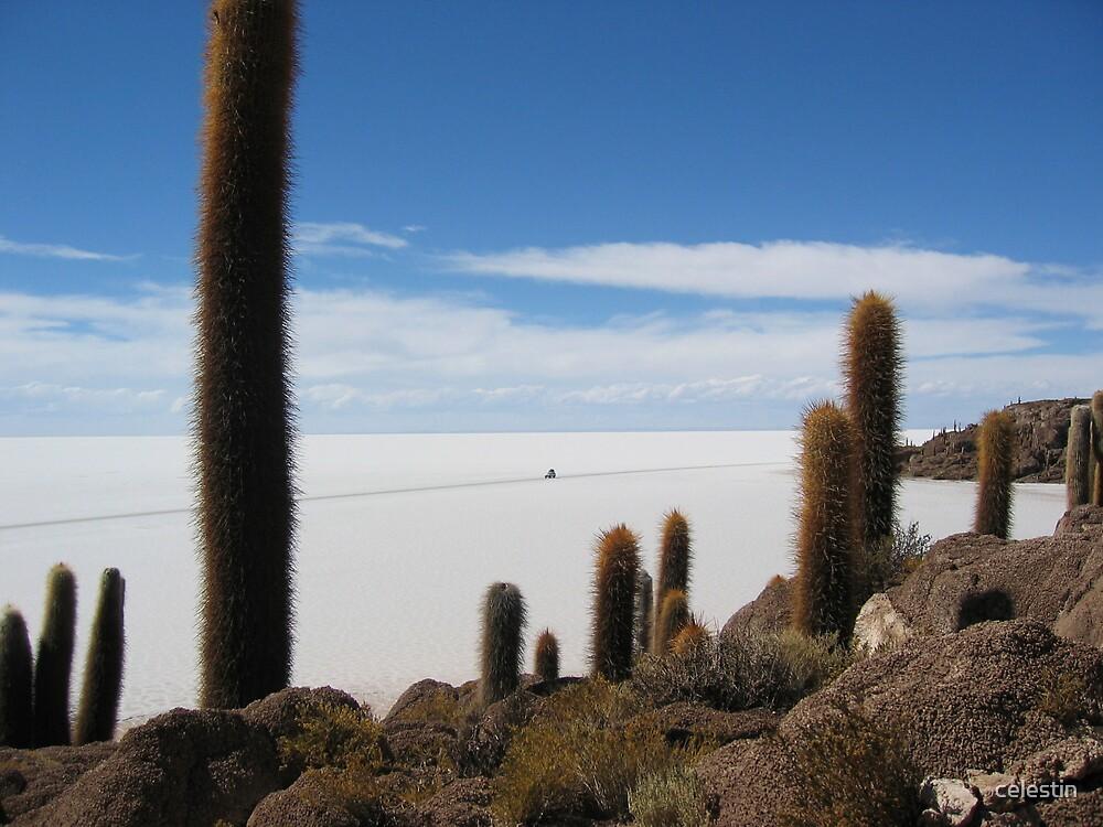 Sea of salt by celestin