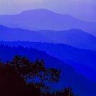 SUNRISE, NEWFOUND GAP by Chuck Wickham