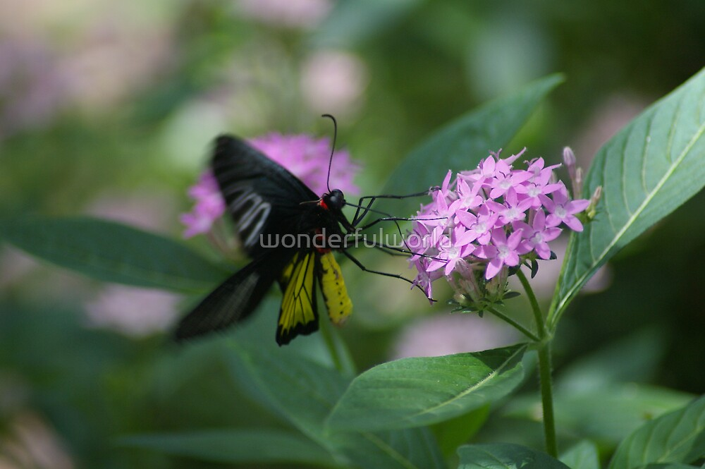 Butterfly No.6, May 2008 by wonderfulworld