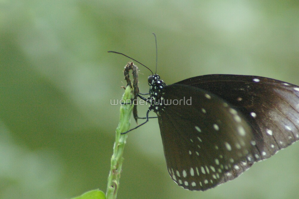 Butterfly #10 – May 2008 by wonderfulworld