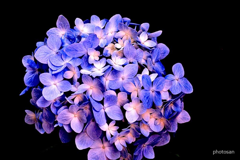 Pretty Flower by photosan