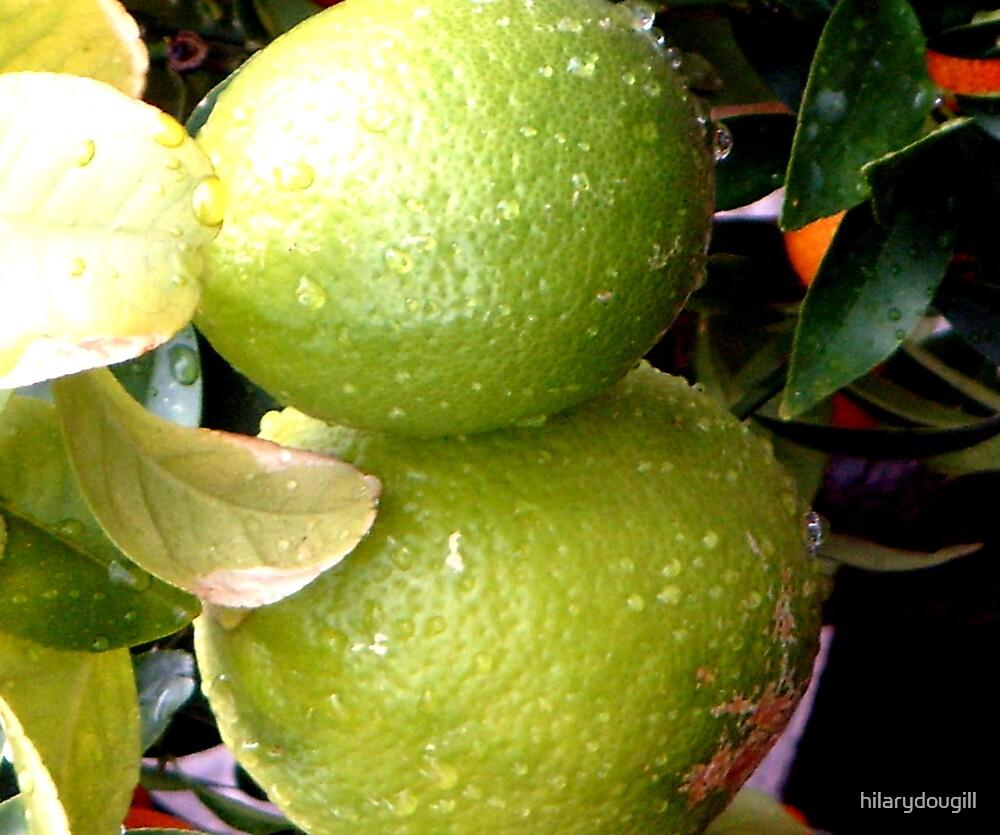 Lemons by hilarydougill