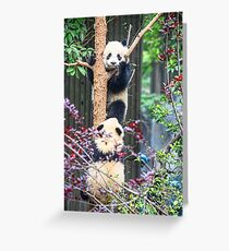 China. Chengdu. Panda Research Base. Baby Pandas. Greeting Card