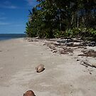 coconut beach by stickelsimages