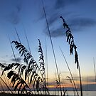 Sea Oats Silhouette by Rosie Brown