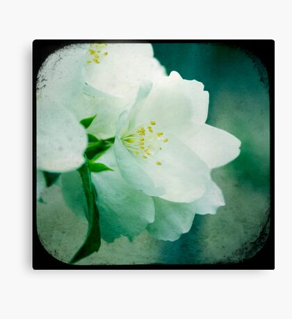 One with Life Canvas Print