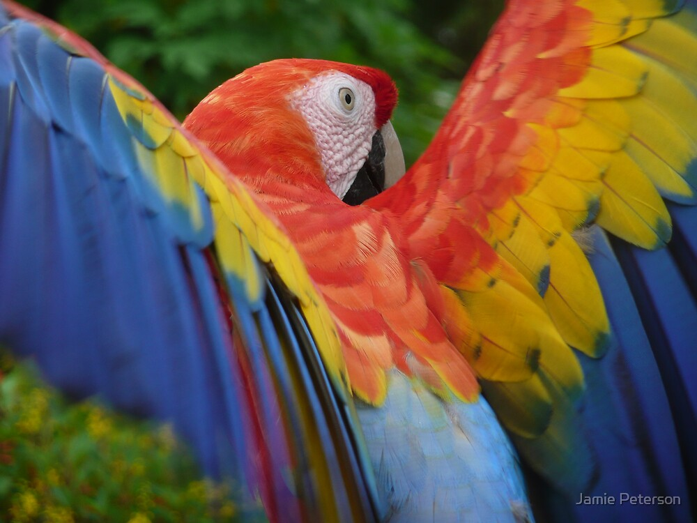 Feather Rainbow by Jamie Peterson