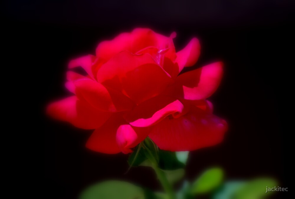New Rose 2 by jackitec