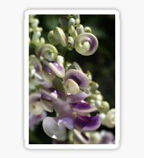 Corkscrew Vine Flower Sticker