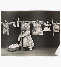 Kitten hanging out the washing Poster