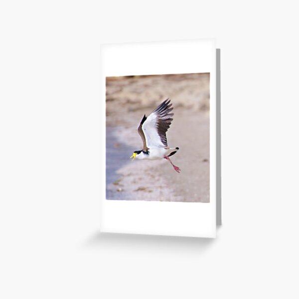 LAPWING ~ Masked Lapwing by David Irwin Greeting Card