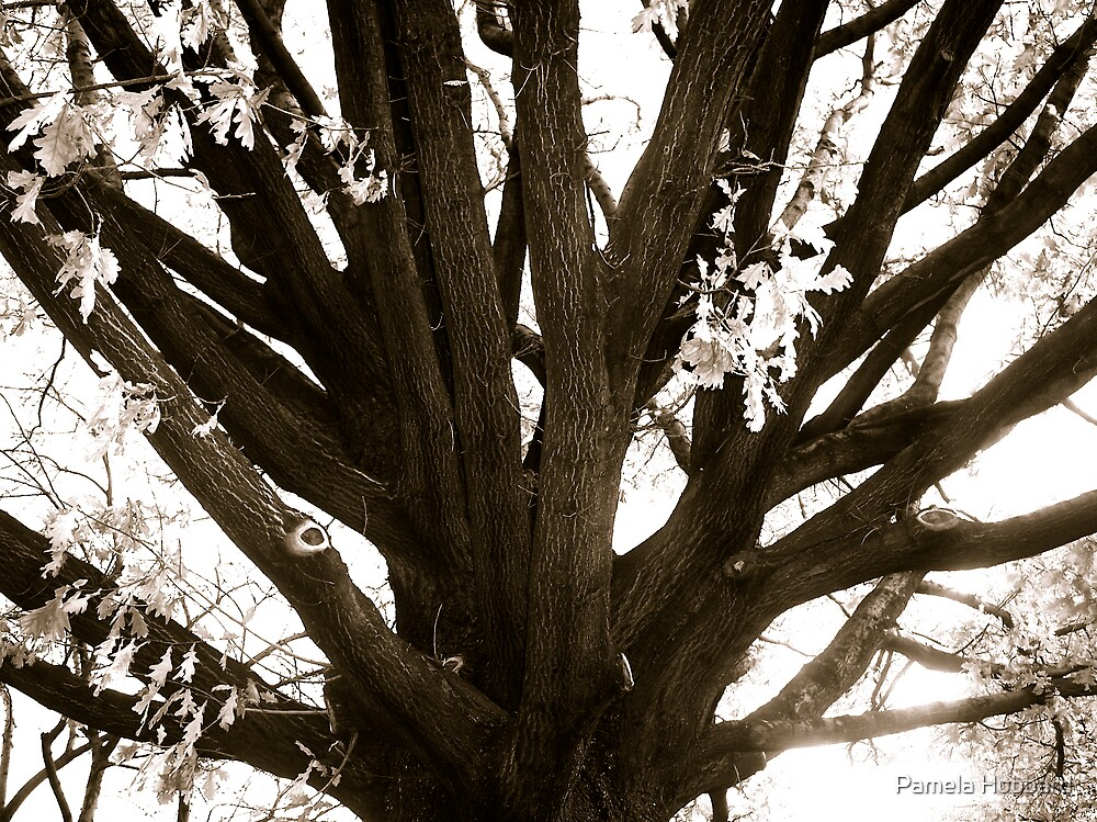 Oak Tree by Pamela Hubbard