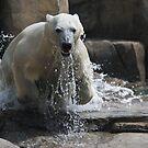 polar jump by jude walton