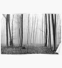 Foggy Winter Forest Poster
