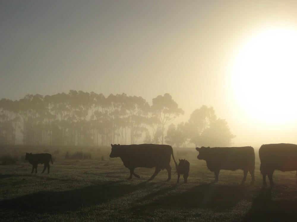 Misty Morning by Robyn Stewart