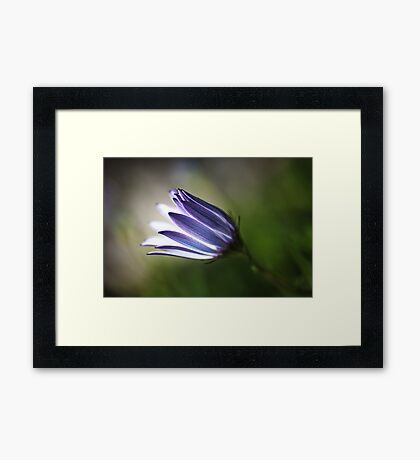 Beautiful Inner Glow Of Daisy Framed Print