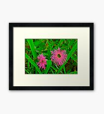 Tiny Pink Weeds Framed Print