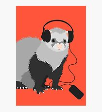Funny Musical Ferret Photographic Print