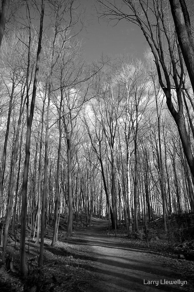 Trees by Larry Llewellyn