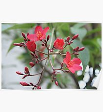 Simply Red; Blooming Tree in Wat Garden; La Mirada, CA USA Poster
