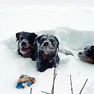Snow Dogs  by peaceofthenorth
