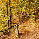 Autumn 8 by Dominika Aniola