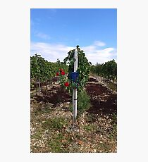 Rose Vineyard Photographic Print