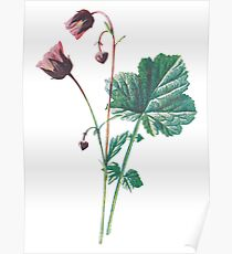 Water Avens Plant Art Painting Poster