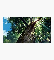 Miyazaki's Forest Photographic Print